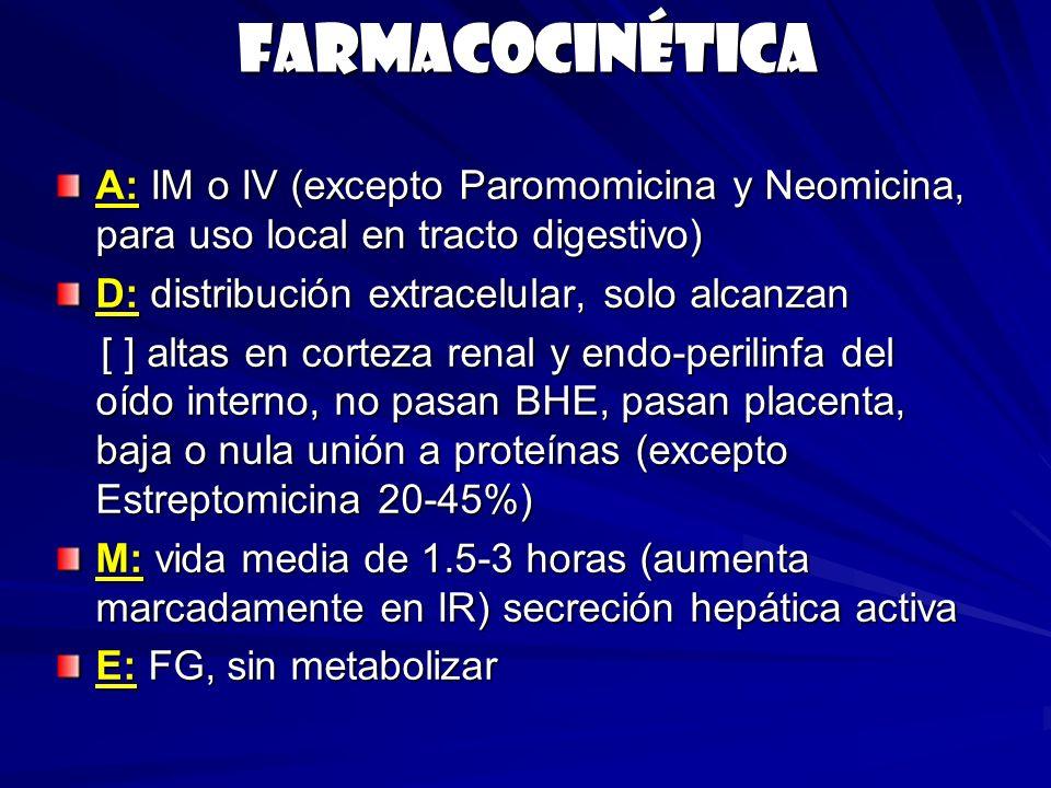 Farmacocinética A: IM o IV (excepto Paromomicina y Neomicina, para uso local en tracto digestivo) D: distribución extracelular, solo alcanzan [ ] alta