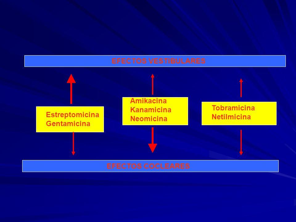 EFECTOS VESTIBULARES EFECTOS COCLEARES Estreptomicina Gentamicina Amikacina Kanamicina Neomicina Tobramicina Netilmicina