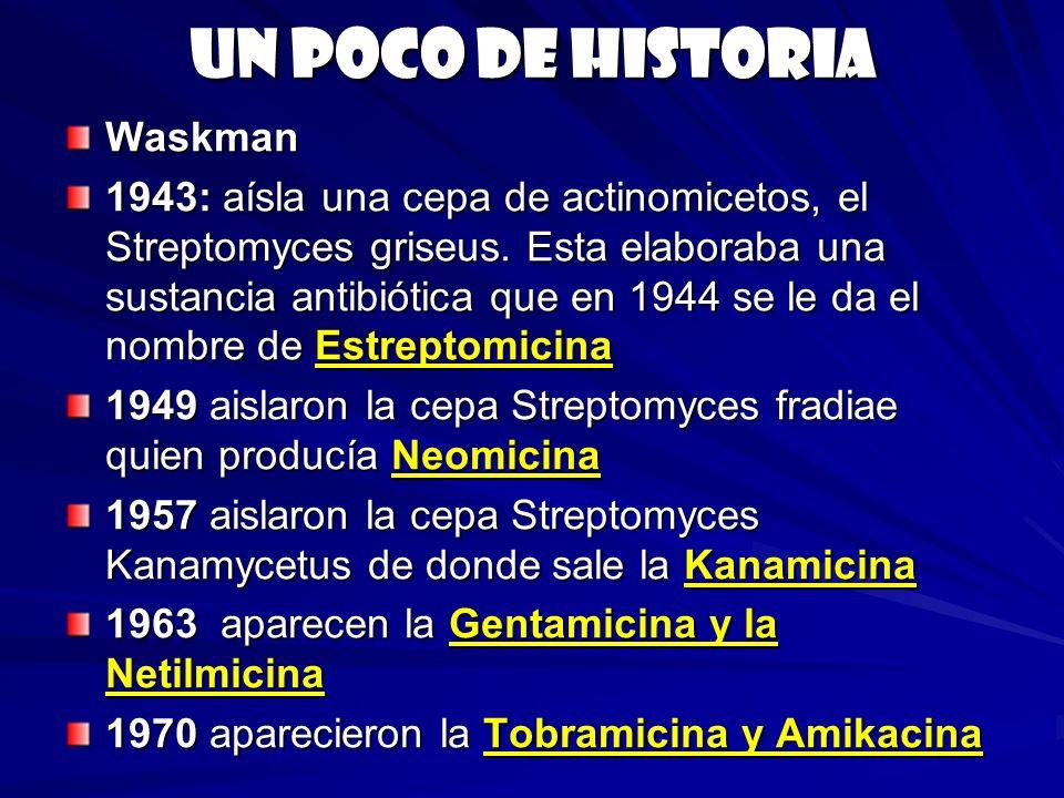 Un poco de historia Waskman 1943: aísla una cepa de actinomicetos, el Streptomyces griseus. Esta elaboraba una sustancia antibiótica que en 1944 se le