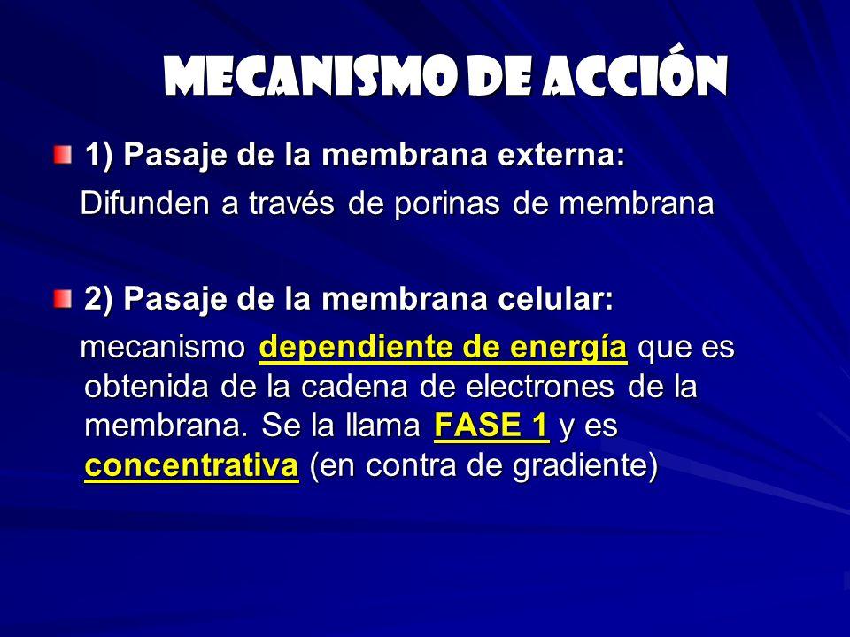 Mecanismo de acción 1) Pasaje de la membrana externa: Difunden a través de porinas de membrana Difunden a través de porinas de membrana 2) Pasaje de l