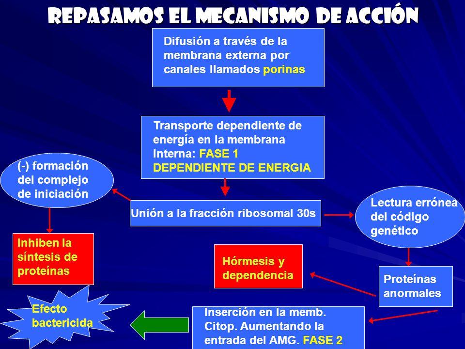 Interacciones adversas Ototoxicidad: Vancomicina, Cisplatino y Diuréticos de asa Nefrotoxicidad: Vancomicina, Cisplatino, Anfotericina B, Diuréticos de asa, Cefalosporinas.