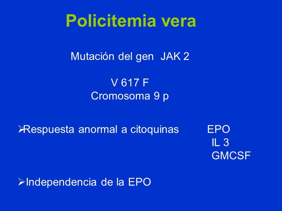 Policitemia vera Mutación del gen JAK 2 V 617 F Cromosoma 9 p Respuesta anormal a citoquinas EPO IL 3 GMCSF Independencia de la EPO