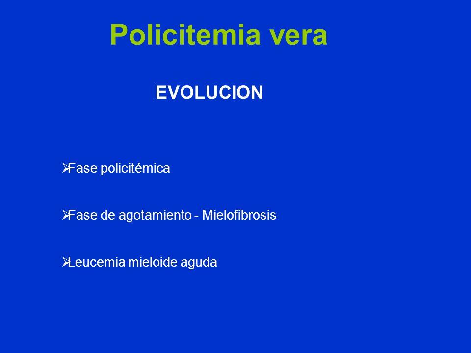 Policitemia vera EVOLUCION Fase policitémica Fase de agotamiento - Mielofibrosis Leucemia mieloide aguda