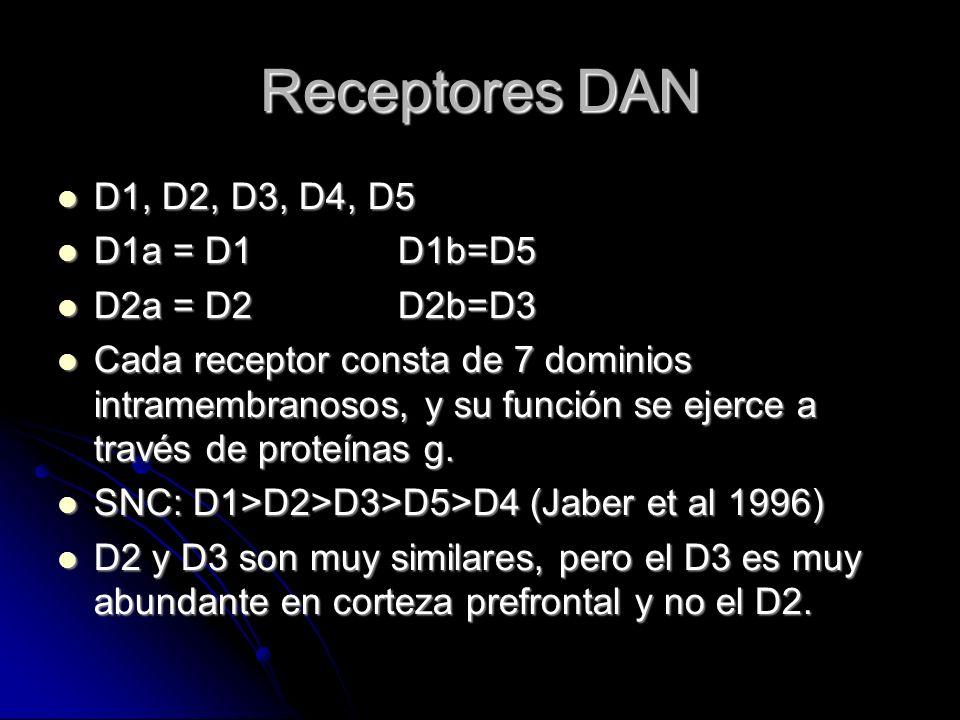 Receptores DAN D1, D2, D3, D4, D5 D1, D2, D3, D4, D5 D1a = D1 D1b=D5 D1a = D1 D1b=D5 D2a = D2 D2b=D3 D2a = D2 D2b=D3 Cada receptor consta de 7 dominios intramembranosos, y su función se ejerce a través de proteínas g.