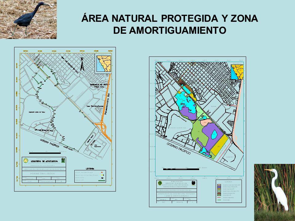 ÁREA NATURAL PROTEGIDA Y ZONA DE AMORTIGUAMIENTO
