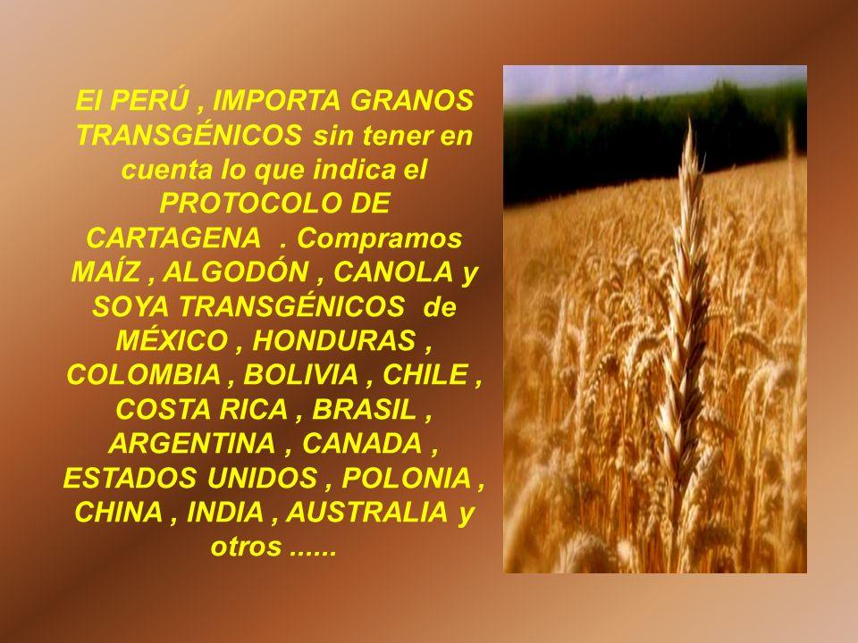 El PERÚ, IMPORTA GRANOS TRANSGÉNICOS sin tener en cuenta lo que indica el PROTOCOLO DE CARTAGENA. Compramos MAÍZ, ALGODÓN, CANOLA y SOYA TRANSGÉNICOS