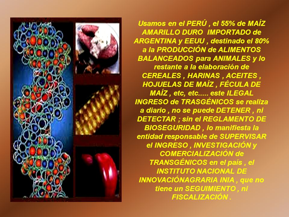 Usamos en el PERÚ, el 55% de MAÍZ AMARILLO DURO IMPORTADO de ARGENTINA y EEUU, destinado el 80% a la PRODUCCIÓN de ALIMENTOS BALANCEADOS para ANIMALES
