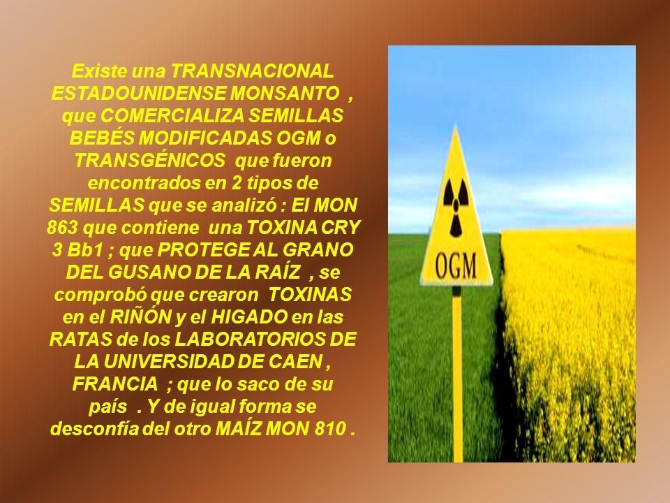 Existe una TRANSNACIONAL ESTADOUNIDENSE MONSANTO, que COMERCIALIZA SEMILLAS BEBÉS MODIFICADAS OGM o TRANSGÉNICOS que fueron encontrados en 2 tipos de
