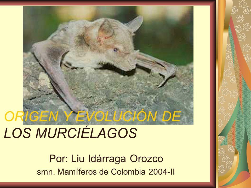 ORIGEN Y EVOLUCIÓN DE LOS MURCIÉLAGOS Por: Liu Idárraga Orozco smn. Mamíferos de Colombia 2004-II