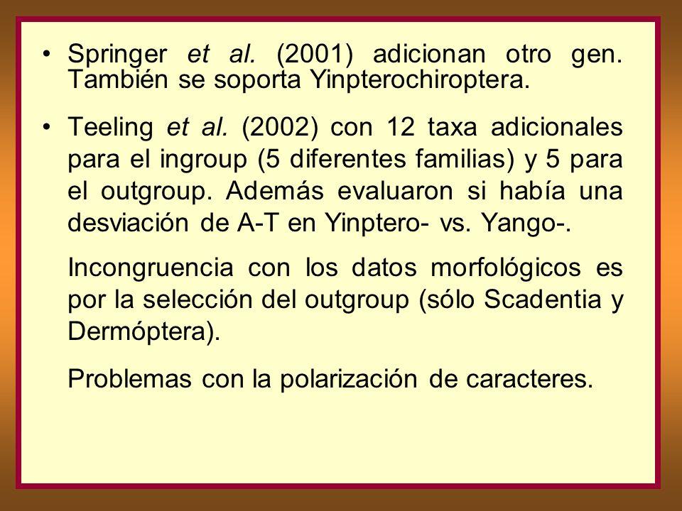 Springer et al. (2001) adicionan otro gen. También se soporta Yinpterochiroptera. Teeling et al. (2002) con 12 taxa adicionales para el ingroup (5 dif