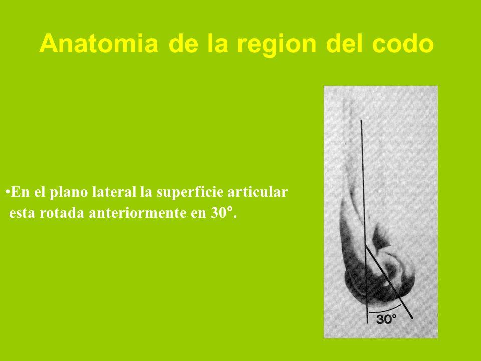 En el plano transverso la superficie articular tiene una ligera Rotacion lateral entre 3 y 8° Anatomia de la region del codo