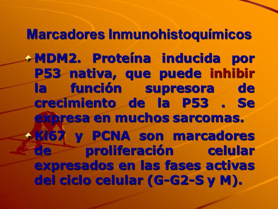 Marcadores Inmunohistoquímicos MDM2. Proteína inducida por P53 nativa, que puede inhibir la función supresora de crecimiento de la P53. Se expresa en