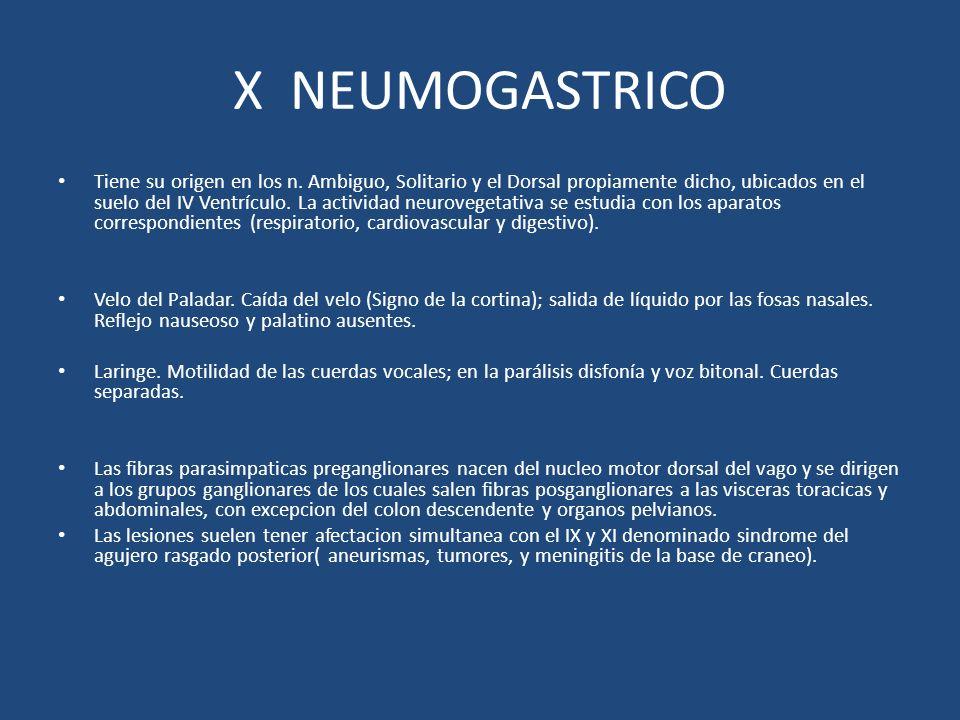 X NEUMOGASTRICO Tiene su origen en los n. Ambiguo, Solitario y el Dorsal propiamente dicho, ubicados en el suelo del IV Ventrículo. La actividad neuro