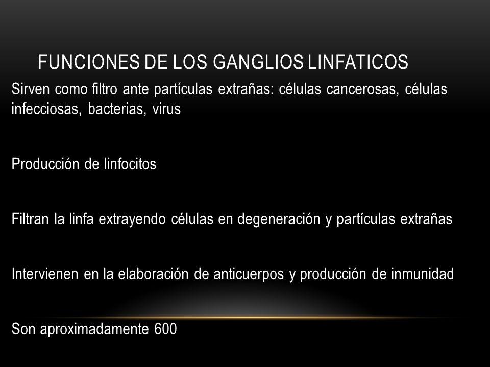 FUNCIONES DE LOS GANGLIOS LINFATICOS Sirven como filtro ante partículas extrañas: células cancerosas, células infecciosas, bacterias, virus Producción