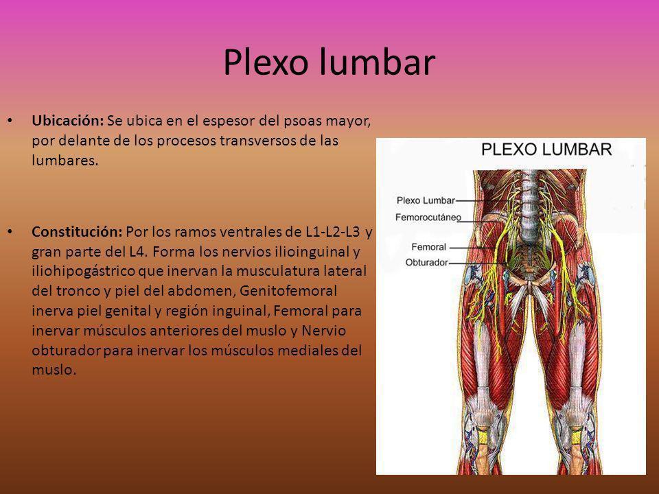 Plexo lumbar Ubicación: Se ubica en el espesor del psoas mayor, por delante de los procesos transversos de las lumbares. Constitución: Por los ramos v