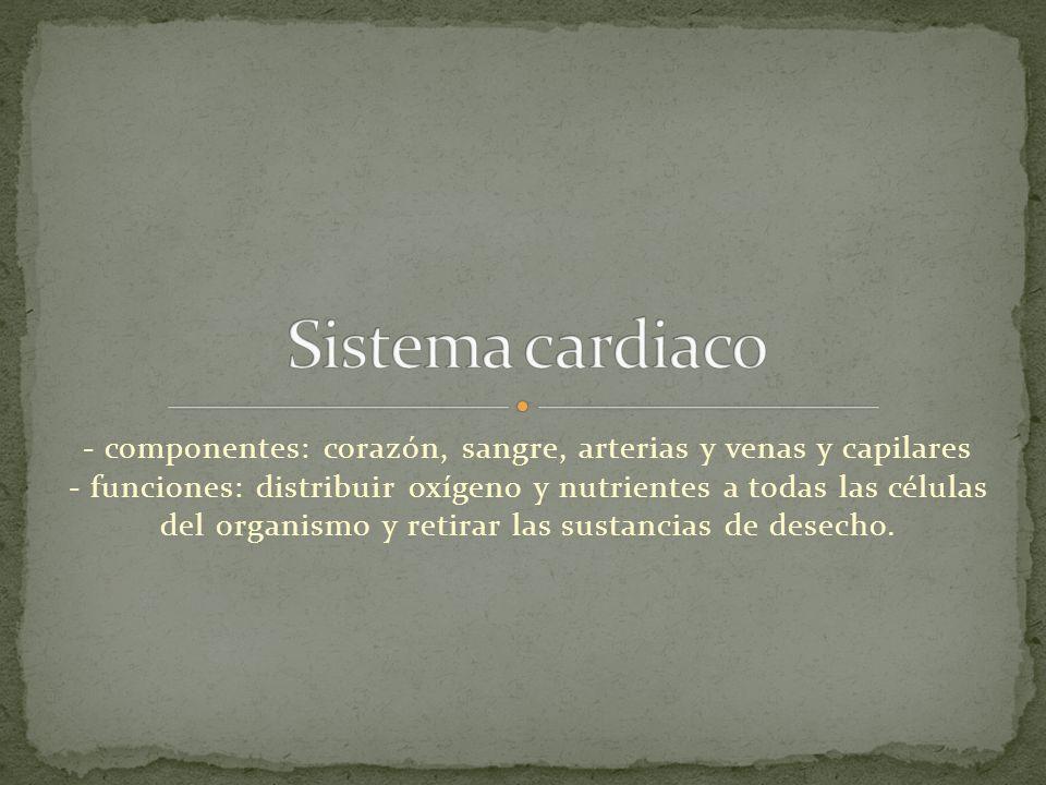 - componentes: corazón, sangre, arterias y venas y capilares - funciones: distribuir oxígeno y nutrientes a todas las células del organismo y retirar