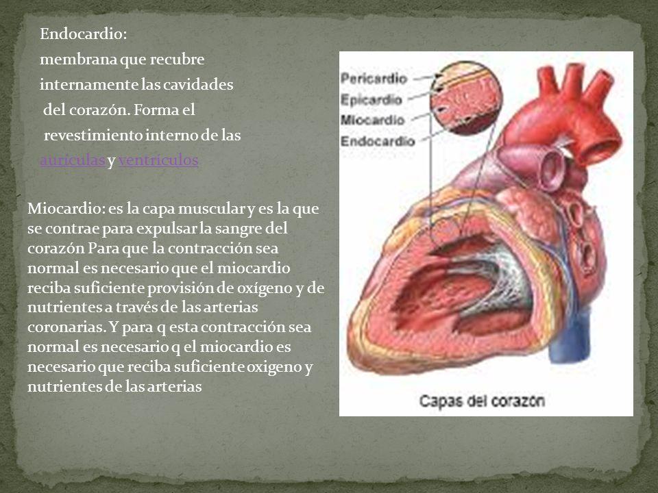Endocardio: membrana que recubre internamente las cavidades del corazón. Forma el revestimiento interno de las aurículasaurículas y ventrículosventríc
