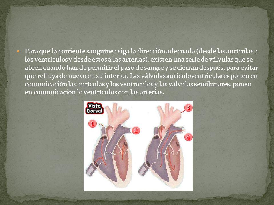Para que la corriente sanguínea siga la dirección adecuada (desde las aurículas a los ventrículos y desde estos a las arterias), existen una serie de