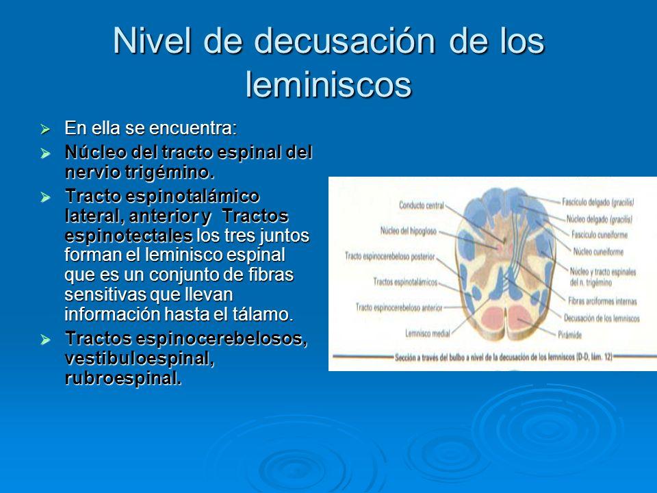 Nivel de decusación de los leminiscos En ella se encuentra: En ella se encuentra: Núcleo del tracto espinal del nervio trigémino. Núcleo del tracto es