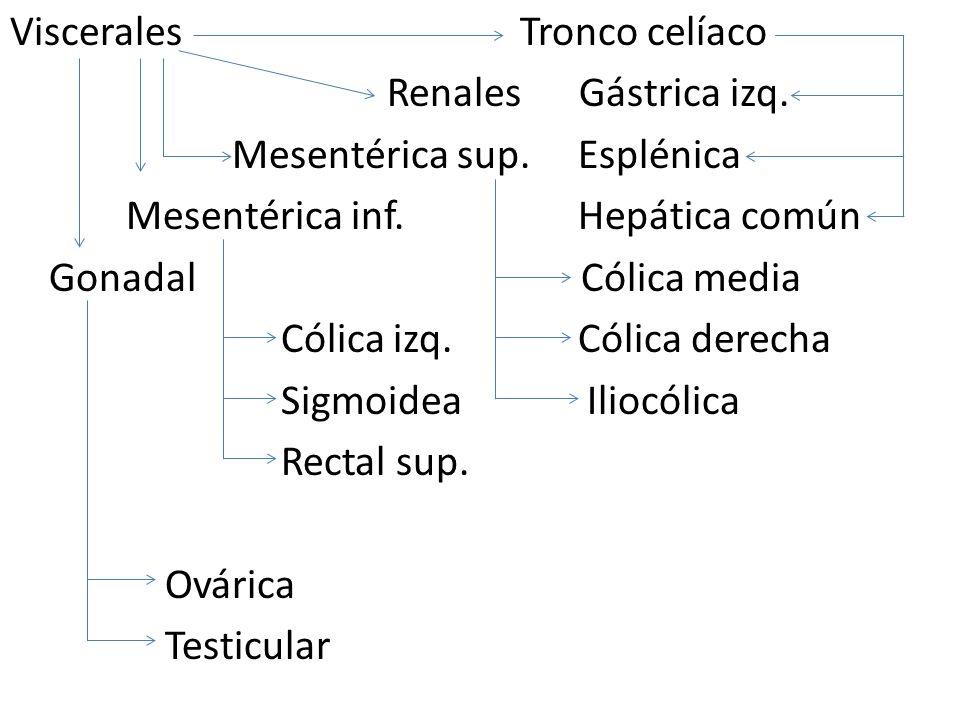 Viscerales Tronco celíaco Renales Gástrica izq.Mesentérica sup.