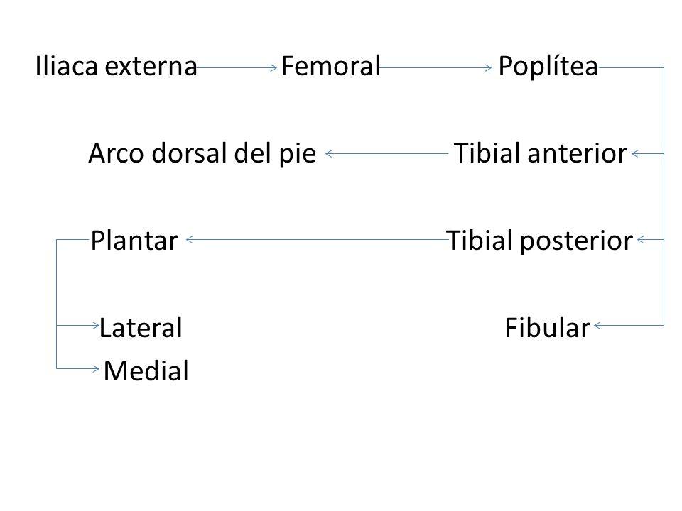 Iliaca externa Femoral Poplítea Arco dorsal del pie Tibial anterior Plantar Tibial posterior Lateral Fibular Medial