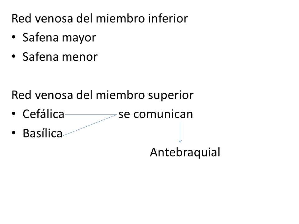 Red venosa del miembro inferior Safena mayor Safena menor Red venosa del miembro superior Cefálica se comunican Basílica Antebraquial
