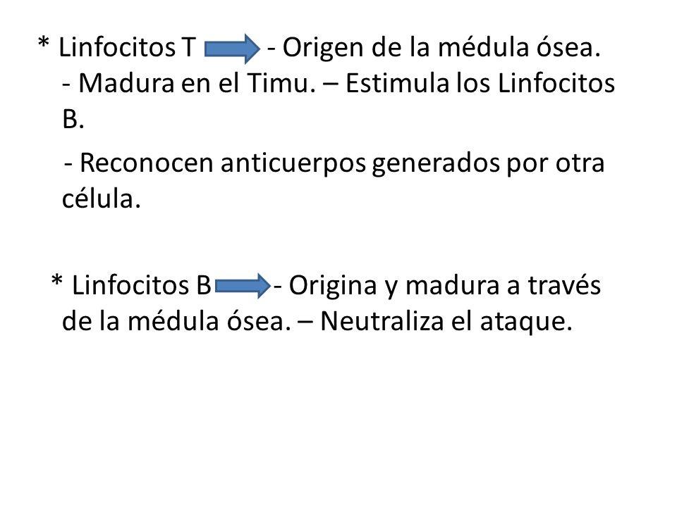 * Linfocitos T - Origen de la médula ósea.- Madura en el Timu.