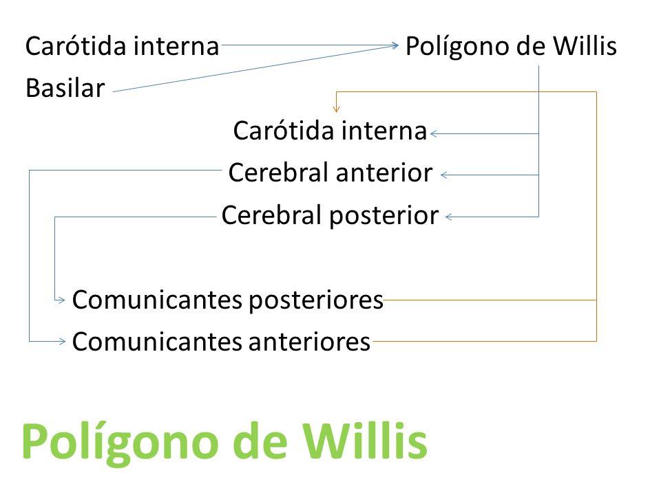 Carótida interna Polígono de Willis Basilar Carótida interna Cerebral anterior Cerebral posterior Comunicantes posteriores Comunicantes anteriores Polígono de Willis