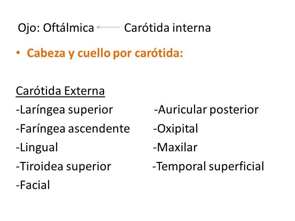 Ojo: Oftálmica Carótida interna Cabeza y cuello por carótida: Carótida Externa -Laríngea superior -Auricular posterior -Faríngea ascendente -Oxipital -Lingual -Maxilar -Tiroidea superior -Temporal superficial -Facial