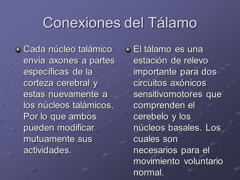 Conexiones del Tálamo Cada núcleo talámico envía axones a partes específicas de la corteza cerebral y estas nuevamente a los núcleos talámicos. Por lo