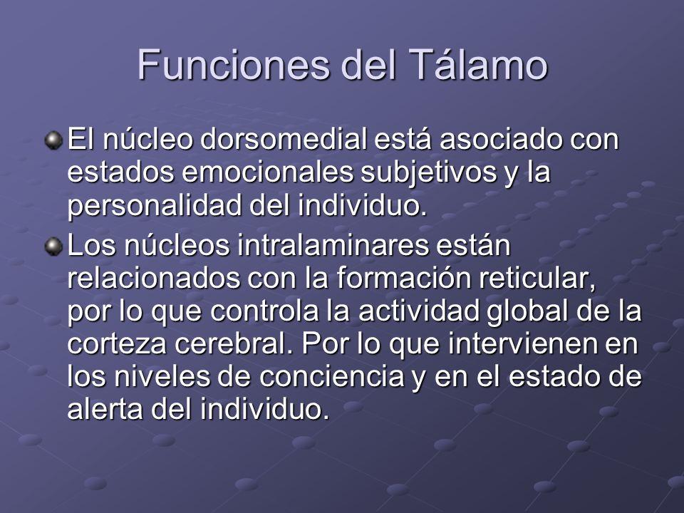 Funciones del Tálamo El núcleo dorsomedial está asociado con estados emocionales subjetivos y la personalidad del individuo. Los núcleos intralaminare