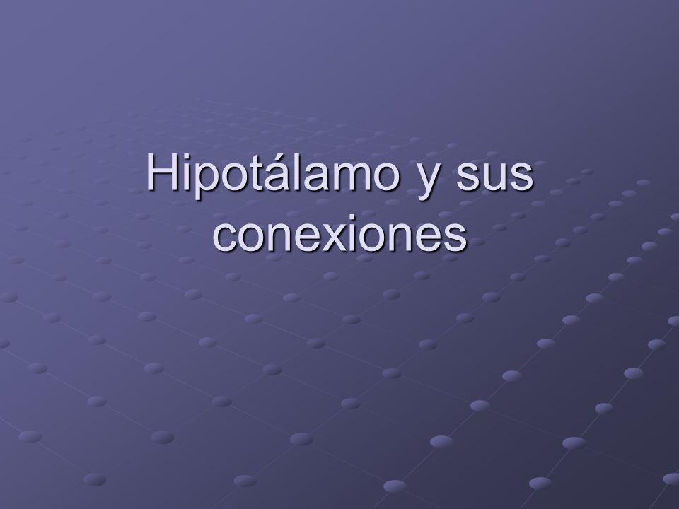 Hipotálamo y sus conexiones