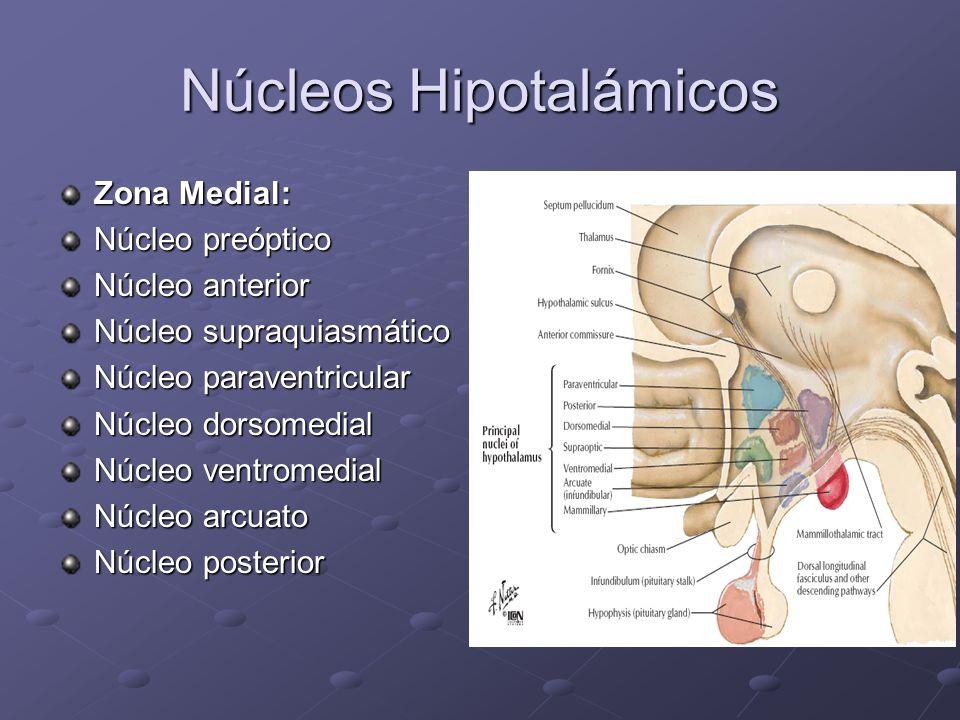 Núcleos Hipotalámicos Zona Medial: Núcleo preóptico Núcleo anterior Núcleo supraquiasmático Núcleo paraventricular Núcleo dorsomedial Núcleo ventromed