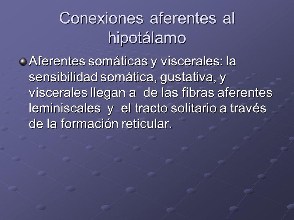 Conexiones aferentes al hipotálamo Aferentes somáticas y viscerales: la sensibilidad somática, gustativa, y viscerales llegan a de las fibras aferente