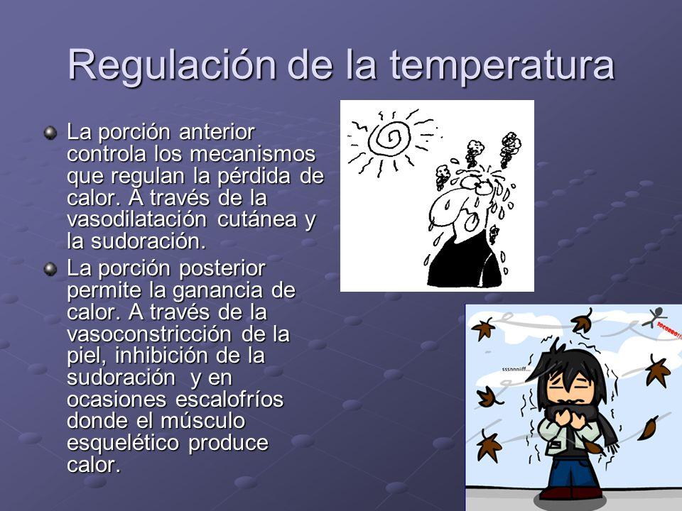 Regulación de la temperatura La porción anterior controla los mecanismos que regulan la pérdida de calor. A través de la vasodilatación cutánea y la s