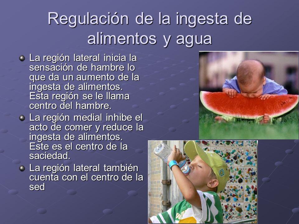 Regulación de la ingesta de alimentos y agua La región lateral inicia la sensación de hambre lo que da un aumento de la ingesta de alimentos. Esta reg