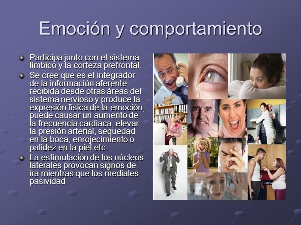 Emoción y comportamiento Participa junto con el sistema límbico y la corteza prefrontal. Se cree que es el integrador de la información aferente recib