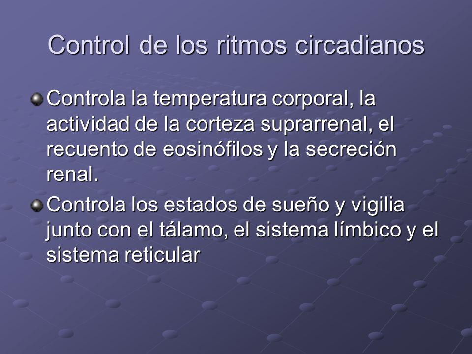 Control de los ritmos circadianos Controla la temperatura corporal, la actividad de la corteza suprarrenal, el recuento de eosinófilos y la secreción