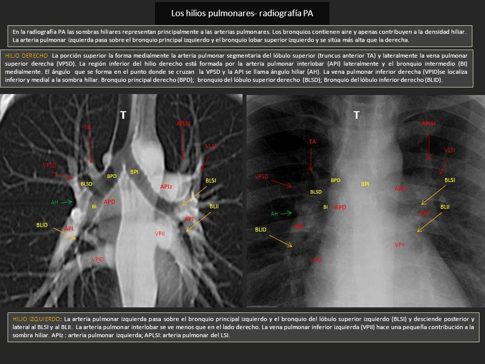 MBE Anatomía: INTRODUCCIÓN.