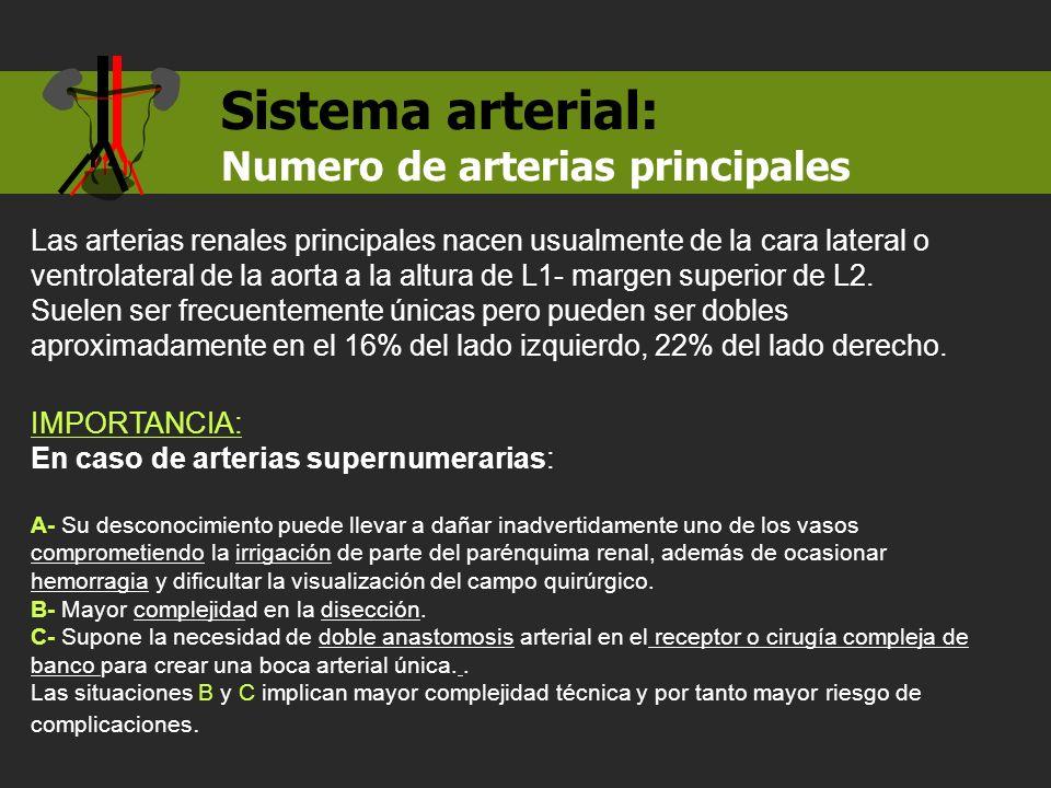 IMPORTANCIA: En caso de arterias supernumerarias: A- Su desconocimiento puede llevar a dañar inadvertidamente uno de los vasos comprometiendo la irrig