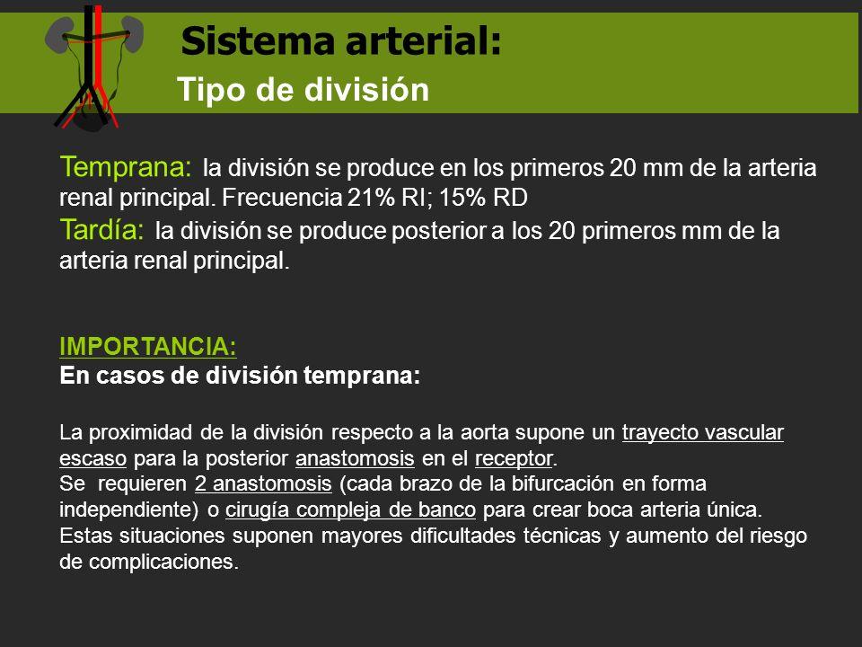 Sistema arterial: Tipo de división Temprana: la división se produce en los primeros 20 mm de la arteria renal principal. Frecuencia 21% RI; 15% RD Tar