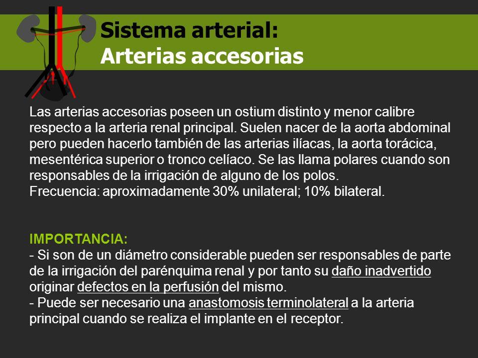 Sistema arterial: Arterias accesorias Las arterias accesorias poseen un ostium distinto y menor calibre respecto a la arteria renal principal. Suelen