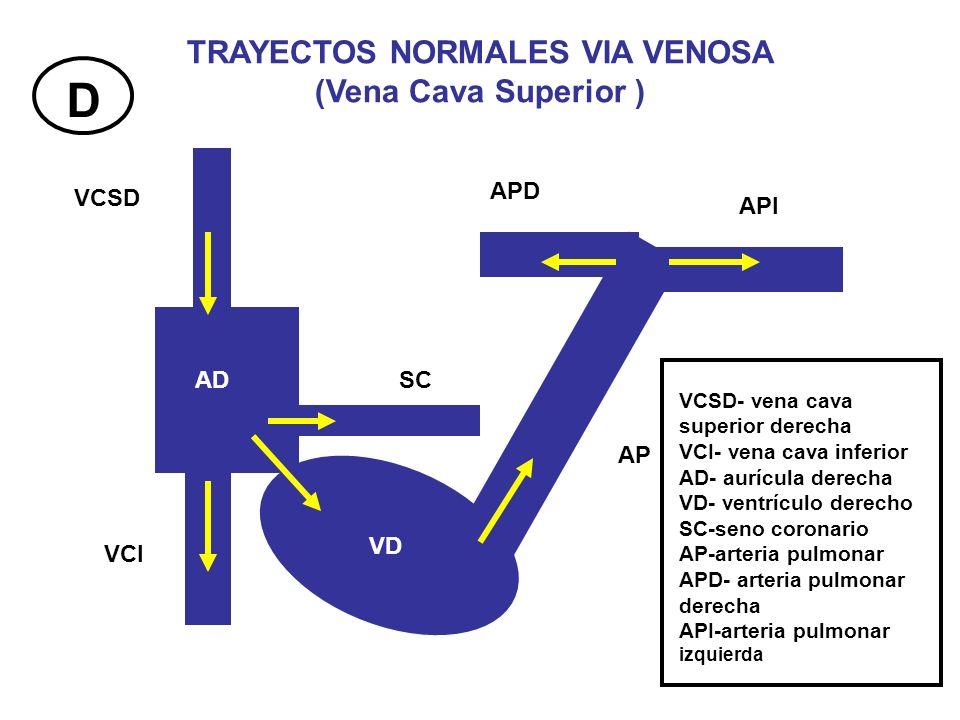 VCSD VCI AD VD SC AP APD API TRAYECTOS NORMALES VIA VENOSA (Vena Cava Superior ) VCSD- vena cava superior derecha VCI- vena cava inferior AD- aurícula