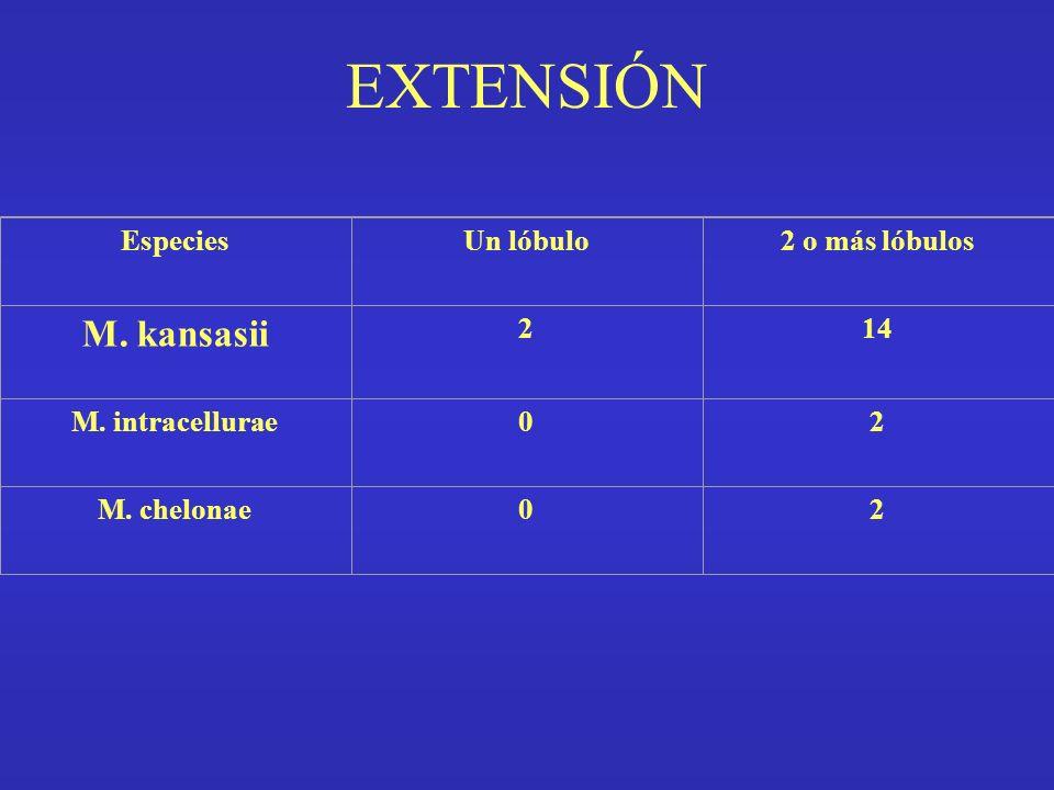 EXTENSIÓN EspeciesUn lóbulo2 o más lóbulos M. kansasii 214 M. intracellurae02 M. chelonae02