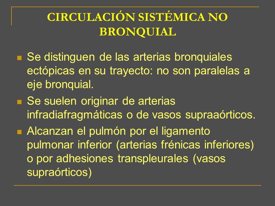 CIRCULACIÓN SISTÉMICA NO BRONQUIAL Se distinguen de las arterias bronquiales ectópicas en su trayecto: no son paralelas a eje bronquial. Se suelen ori