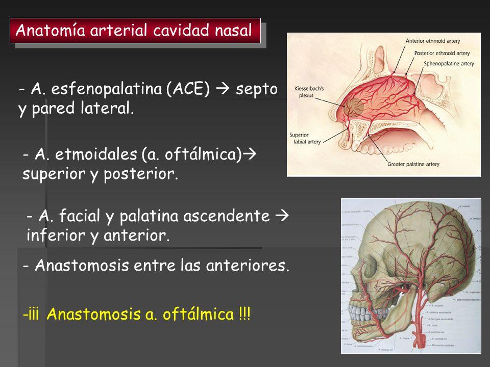 Anatomía arterial cavidad nasal - A. esfenopalatina (ACE) septo y pared lateral. - A. etmoidales (a. oftálmica) superior y posterior. - A. facial y pa