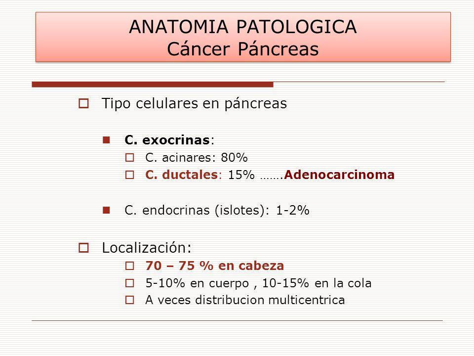 Tipo celulares en páncreas C. exocrinas: C. acinares: 80% C. ductales: 15% …….Adenocarcinoma C. endocrinas (islotes): 1-2% Localización: 70 – 75 % en