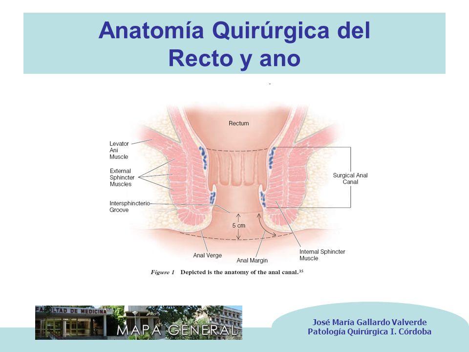 Anatomía Quirúrgica del Recto y ano José María Gallardo Valverde Patología Quirúrgica I. Córdoba