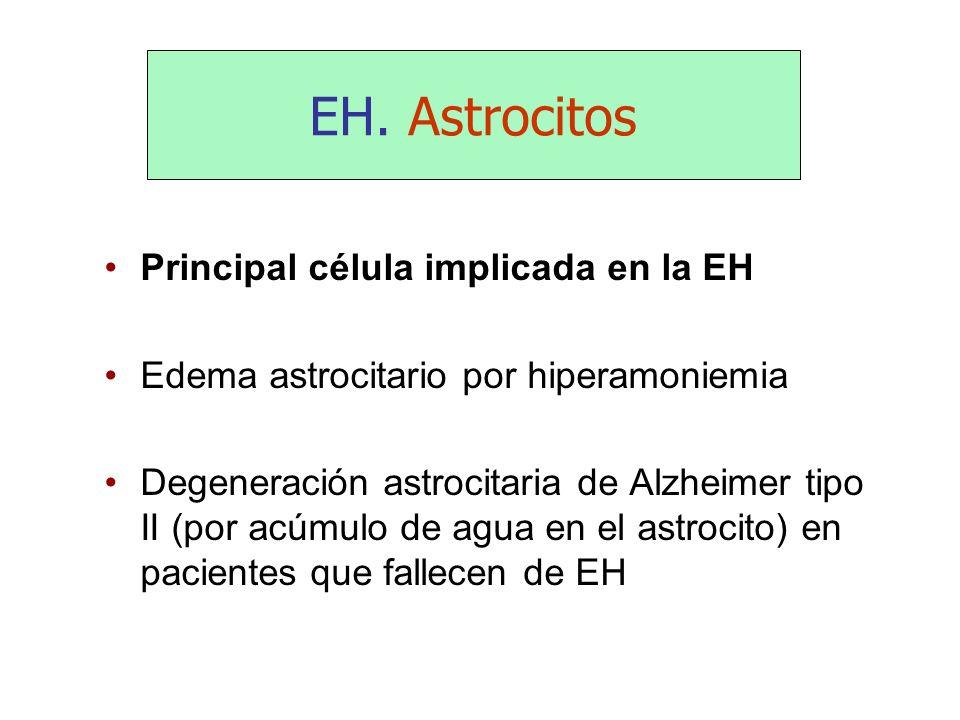 EH. Astrocitos Principal célula implicada en la EH Edema astrocitario por hiperamoniemia Degeneración astrocitaria de Alzheimer tipo II (por acúmulo d