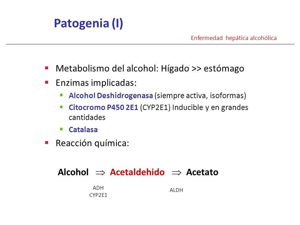 Metabolismo del alcohol: Hígado >> estómago Enzimas implicadas: Alcohol Deshidrogenasa (siempre activa, isoformas) Citocromo P450 2E1 (CYP2E1) Inducib